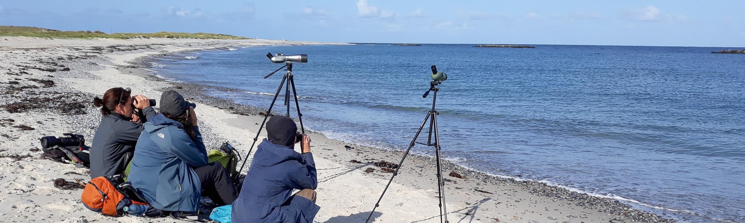 Seewatching auf Helgoland