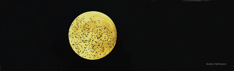 Starenschwarm vor Mond