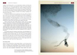 Buchinhalt Die geheime Sprache der Vögel von Ralph Müller