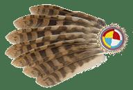 Vogelsprache Blog