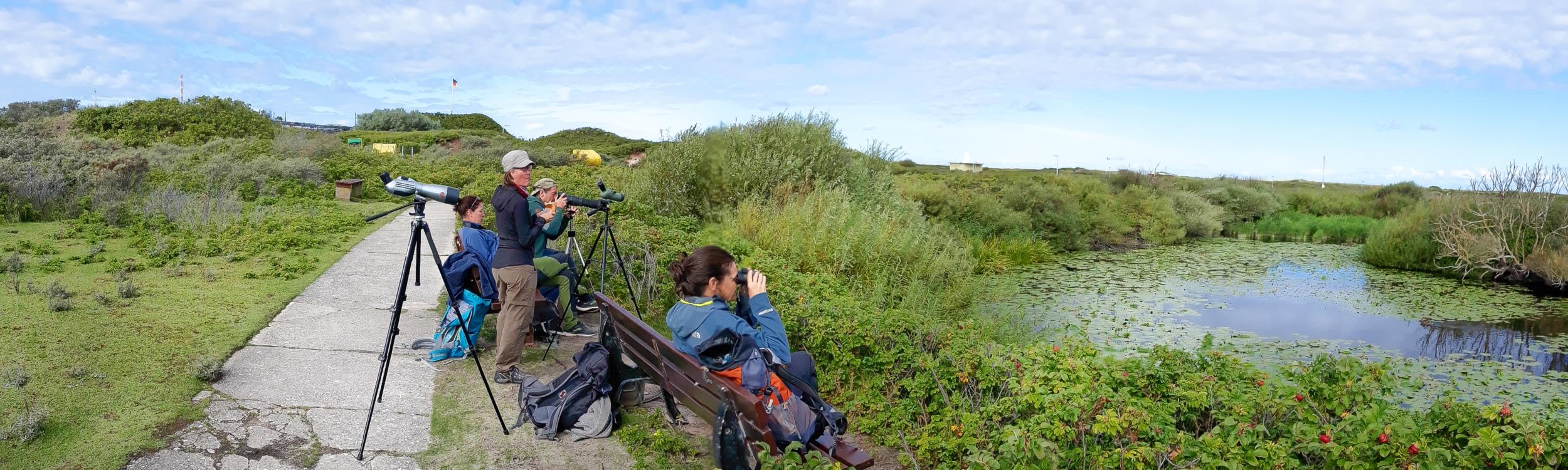 Entspanntes Beobachten auf Helgoland